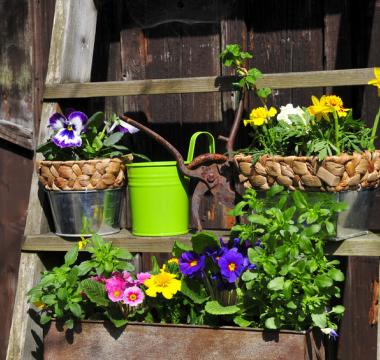 pielegnacja ogrodow klodzko